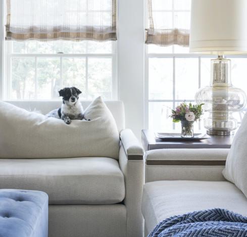 dog-on-couch-huntington-long-island-ny